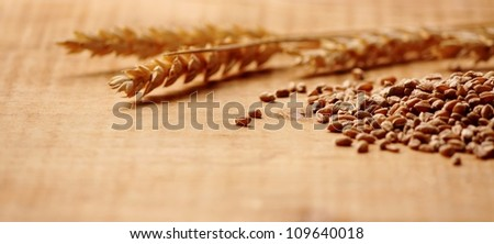Wheat Spike with corn close up - stock photo