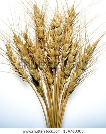 wheat stalks on white background