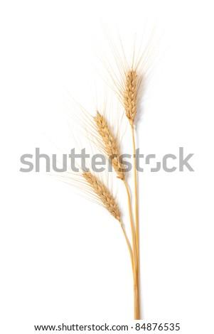 Wheat stems, on white background - stock photo
