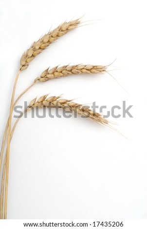 Wheat studio isolated on white background