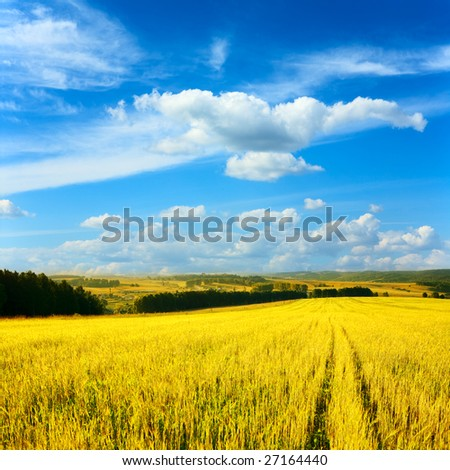 wheaten field and cloudy sky