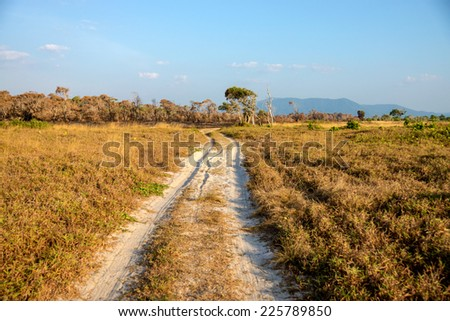 Wheel tracks on a journey into the Savanna grasslands and golden forest at Phang Nga, Thailand. - stock photo