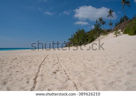Wheel tracks on a tropical beach - stock photo