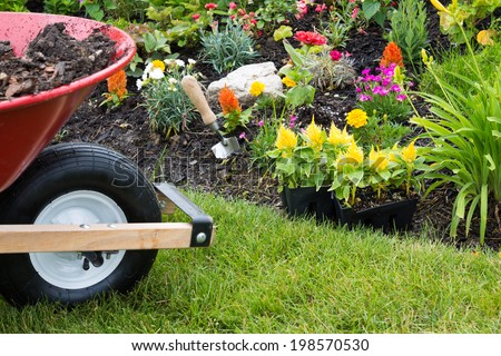 Wheelbarrow alongside a newly planted flowerbed with colorful yellow celosia seedlings in plastic packets waiting to be transplanted into the soil by the landscaper - stock photo