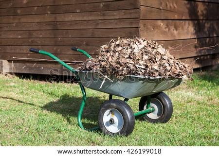 Wheelbarrow full of dry leaf standing in rural backyard near the barn - stock photo