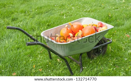 Wheelbarrow full of freshly harvested pumpkins is standing on the grass