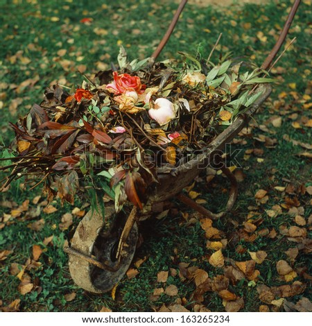Wheelbarrow with the autumn garden waste - stock photo