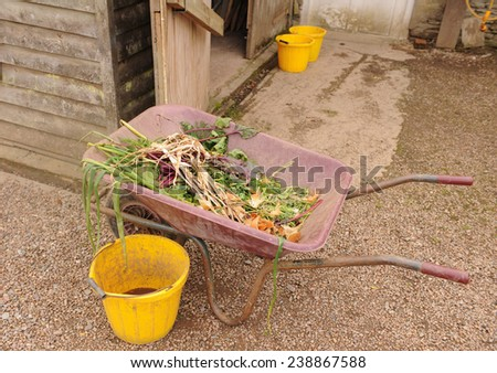 Wheelbarrow with Vegetable Waste and Weeds in a Vegetable Garden, near Barnstaple, in the County of Devon, England, UK - stock photo
