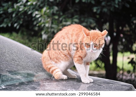 When cat meets dog, frightened cat sitting on a car staring at a dog not in camera, ready to escape. - stock photo