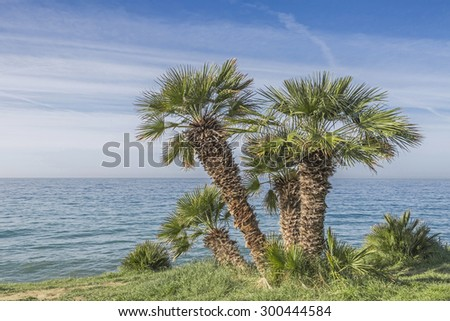 When driving on the Pista ciclabile Parco costiero between San Lorenzo and San Remo, you can admire the magnificent subtropical vegetation - stock photo
