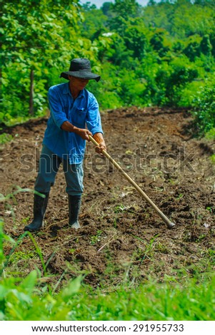 When it rains, the farmers began to change his ants eat cultivated plants always happily - 29 June 2015.