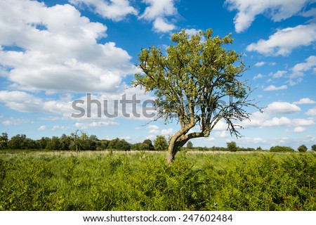 Whimsically shaped tree growing between the ferns on a hot day in the summer season with a bright blue sky and white clouds. - stock photo