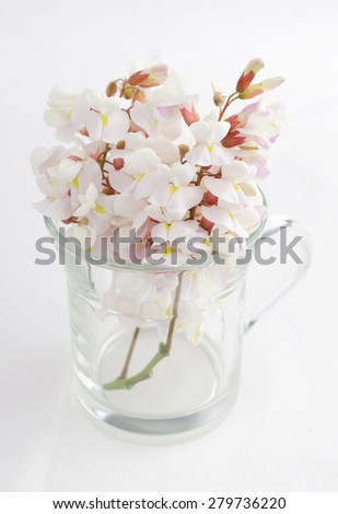 White Acacia Flowers in a transparent mug over white background - stock photo