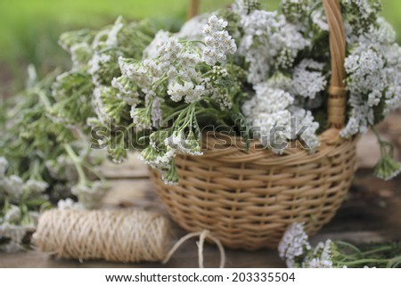white Achillea Millefolium in basket  - stock photo