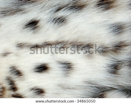 White and black cat fur background - stock photo