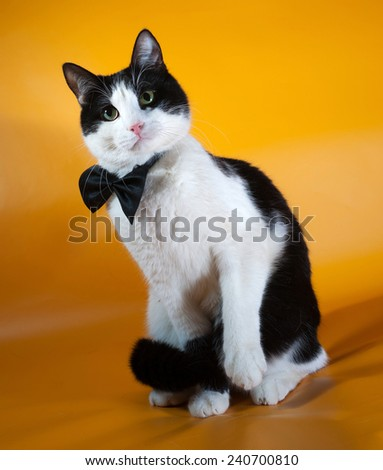 White and black cat in bow tie sitting on yellow background