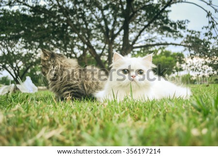 white and black cats on the lawn with holiday color tone