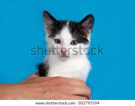 White and black kitten on blue background