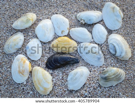 White and black shells on the sea shore - stock photo