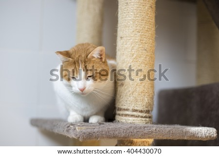 White and blond cat sleeping in shelter - stock photo