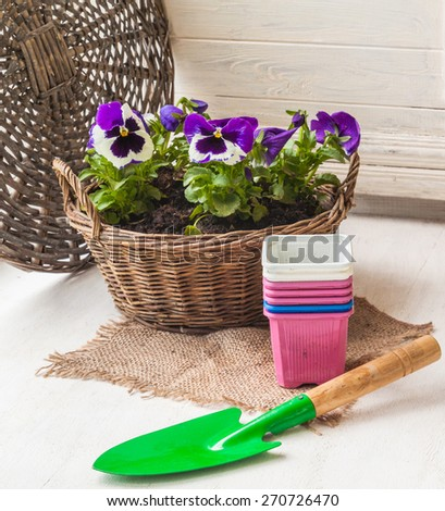White and blue pansies in a rustic basket on the balcony - stock photo
