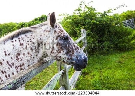 White and Brown Spotted Horse - stock photo