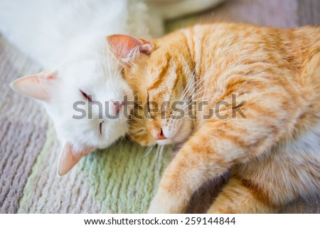 White and ginger yellow cat sleep together  - stock photo