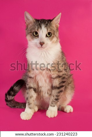 White and gray cat standing on hind legs on pink background