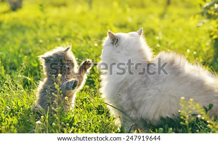 white and gray cats on the green grass - stock photo