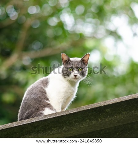 White and Grey Cat On The Roof - stock photo