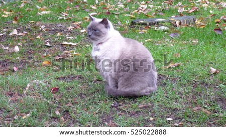 White and grey cat sitting on the grass in the park