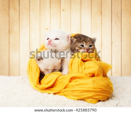 White and grey kittens. Cute kittens in a yellow cotton textile isolated at wooden background. Adorable pets. Small heartwarming kittens. Little cats. Animals isolated. High key - stock photo