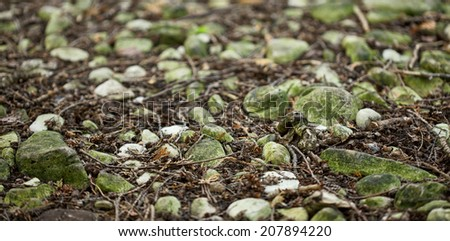 White and mossy green stones in close up on forest path - stock photo
