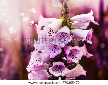 White pink bell flowers spring convallaria stock photo royalty free white and pink bell flowers spring convallaria majalis or lily of the valley blooming mightylinksfo