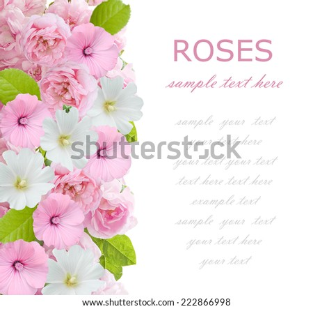 White and pink flowers background isolated on white with sample text - stock photo