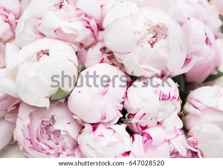 White And Pink Peonies Background Wallpaper