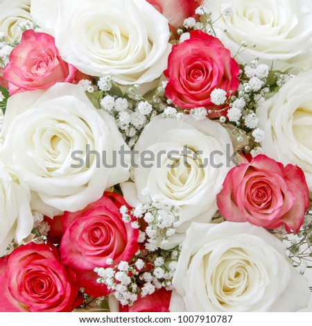 White and Pink Roses as a background