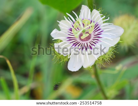 White and  Purple  Flower and Herb for health. - stock photo