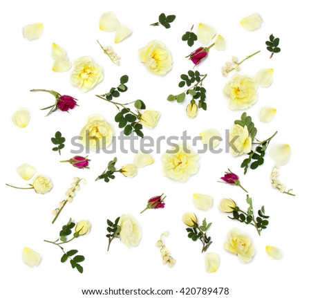 White and red roses (Burnet double white, shrub rose) and lily of the valley on a white background. Flat lay  - stock photo