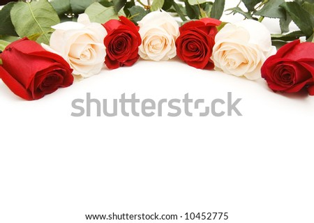 White and red roses isolated on the white