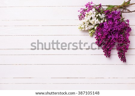 White and violet lilac flowers on white painted wooden planks. Selective focus. Place for text. - stock photo