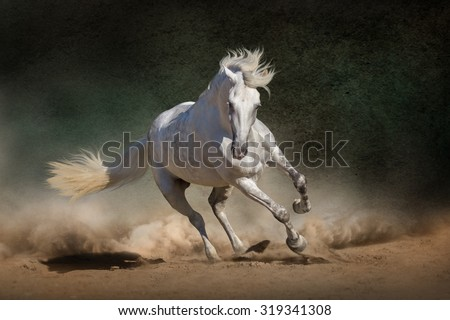 White andalusian horse in desert dust against dark background