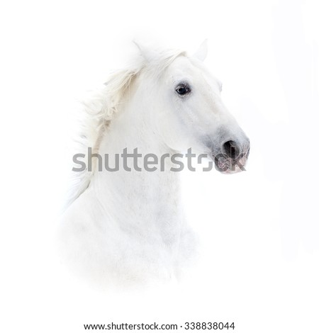 white andalusian horse portrait in high key - stock photo