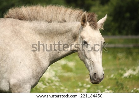 White andalusian young colt portrait at flower field - stock photo