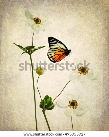 White anemone and butterfly on grunge old canvas,digital illustration,vintage style