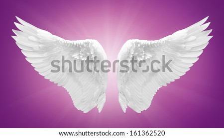 white angel wing isolated - stock photo