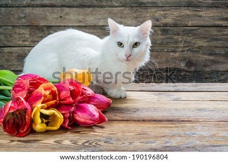 White angora cat and tulip flower on rusti? table - stock photo