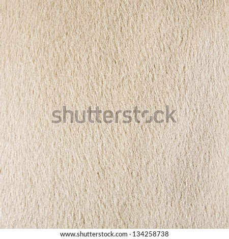 white animal hair texture - stock photo