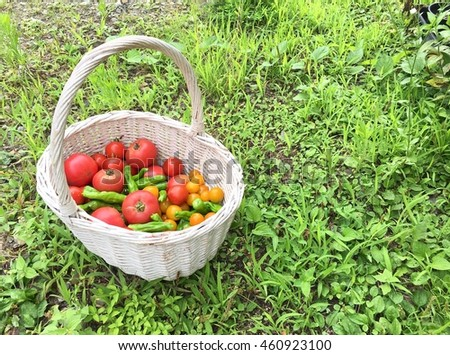 White basket and fresh tomato on green grass background