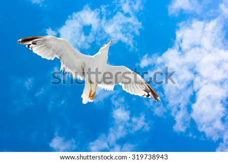 White beautiful flying seagull or tern in the bright blue sky with clouds not far from Greek island Thassos. Thassos island, Greece